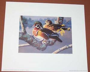 1996 Mexico Duck Stamp Press Proof Print featuring Wood Ducks