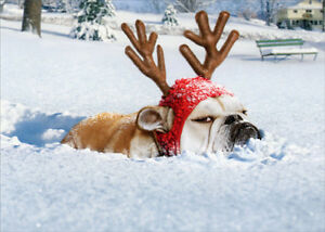 Bulldog Reindeer Stand Out Pop Up Funny Humorous Christmas Card by ...