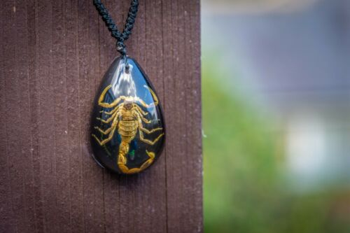 Spider Crab Scorpion Pendant Real Insect Resin Necklace Bizzare weird stuff.