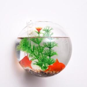 Boule-Vase-Mural-en-Verre-Transparent-a-Plante-Fleur-Decoration-de-Maison