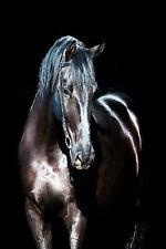 Framed Print - Black Horse Standing in the Shadows (Animal Picture Stallion Art)
