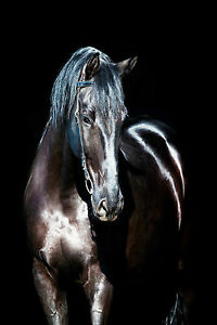 Framed-Print-Black-Horse-Standing-in-the-Shadows-Animal-Picture-Stallion-Art