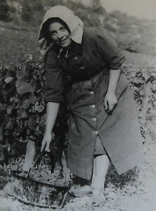 Photographie-Henri-Gros-Dijon-Bourgogne-Vin-Vigne-Vendanges-annees-1930-40-n-57