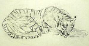 Ruhender Tiger Kohlezeichnung 1950 Great Varieties Heinrich Kutzer