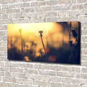 Leinwandbild-Kunst-Druck-140x70-Bilder-Blumen-amp-Pflanzen-Pusteblume
