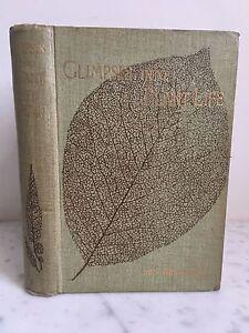Vislumbres-Into-Vida-Vegetal-Mrs-Brightwen-F-E-S-T-FISHER-Unwin-1897