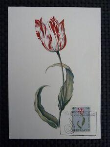 Franc Pays-bas Mk 1960 Flore Fleurs Maximum Carte Carte Maximum Card Mc Cm C1507-afficher Le Titre D'origine