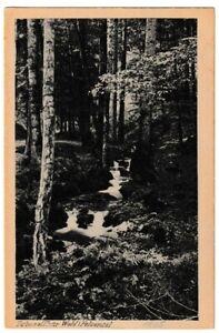 Ansichtskarte Tabarz/Thüringer Wald - Felsental mit Bach - 1925 - schwarz/weiß