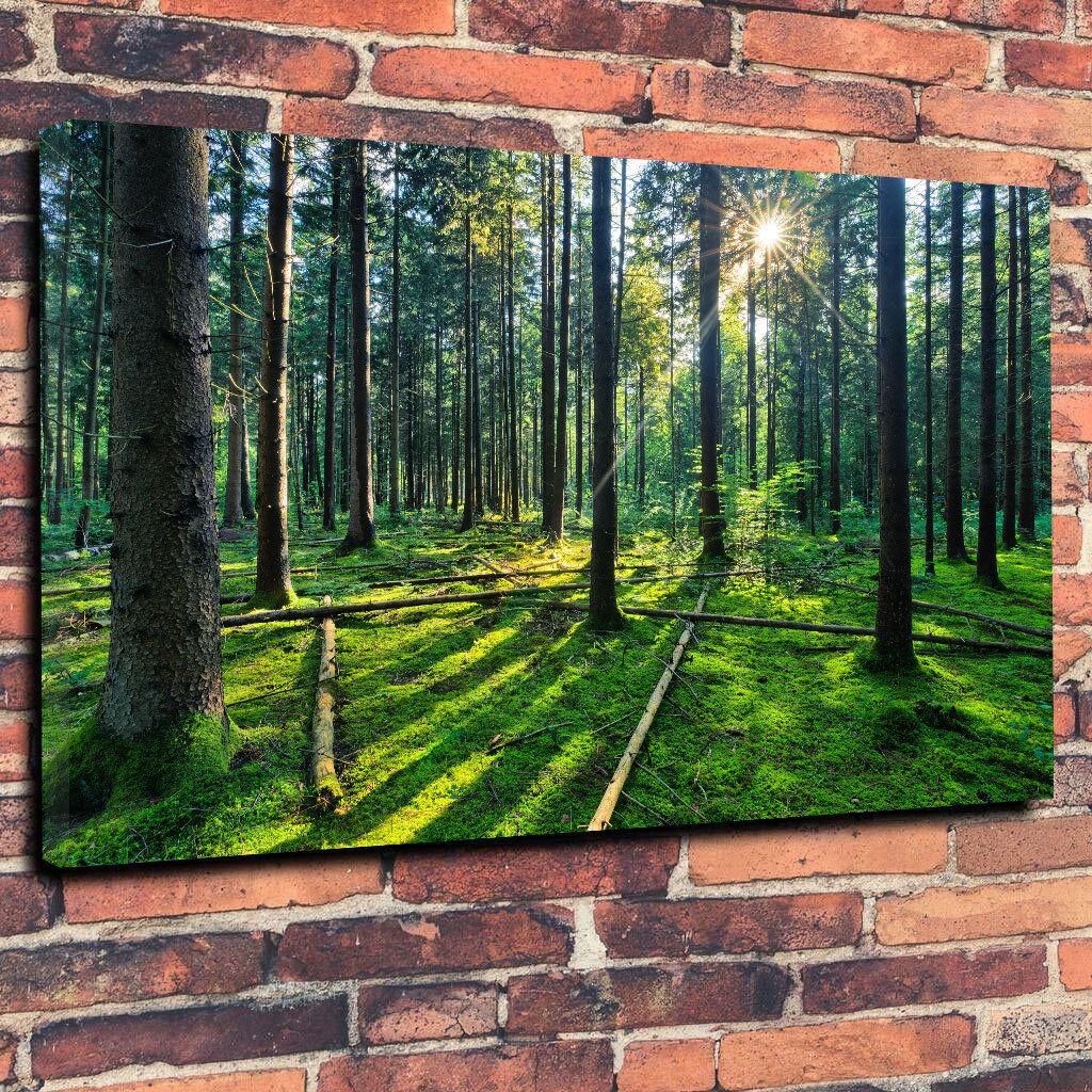 SUNNY Foresta Wall Wall Wall Art Scatola stampata foto su tela A1.30 x20  telaio profondo 30mm f6e992