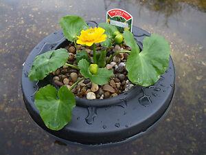 Floating pond pot island basket for marginal plants ebay for Plastic floating pond plants