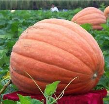 Pumpkin Seed Giant Pumpkin Vegetables Seed Tender Juicy Healthful 5pcs:)
