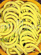 GAMBERO GIALLO CLIMBING POLE BEANS UNUSUAL CURLY YELLOW PODS 20 FRESH SEEDS