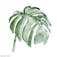 Nordic-Watercolor-Plant-Palm-Leaf-Canvas-Paint-Art-Poster-Home-Wall-Picture-DIY thumbnail 18