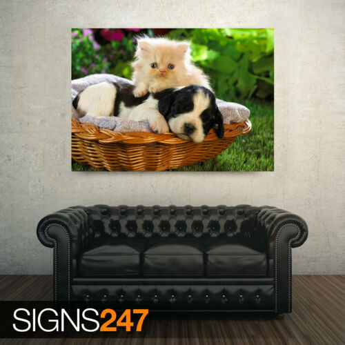 Photo Poster Print Art * All Sizes 3615 Animal Poster CUTE BASKET BUDDIES