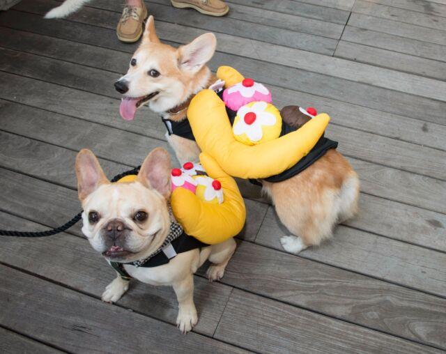 NEW - Top Paw SUNDAE Banana Split Ice Cream Dog Costume SMALL / MEDIUM S / & Top Paw Sundae Banana Split Ice Cream Dog Costume Large L | eBay