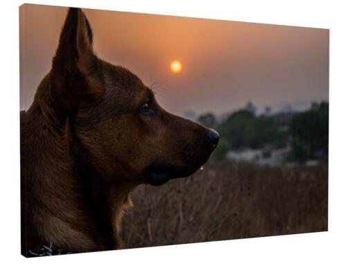 CUTE GERMAN SHEPHERD DOG SUNSET LANDSCAPE WALL ART CANVAS PICTURE PRINT #3393