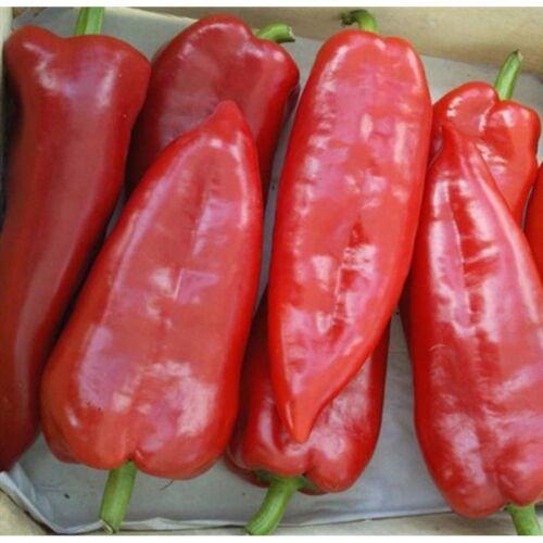 "450 seeds Original Pack/_164 Sweet Pepper /""Kurtovska Kapija/"" RED BIG Vegetable"