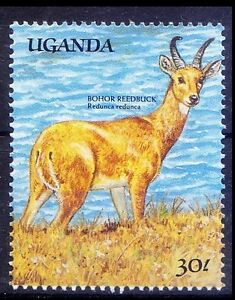 Bohor-Reedbuck-Antelope-native-to-Central-Africa-Wild-Animals-Uganda-MNH-N9