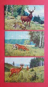3-x-Kuenstler-AK-von-Gonschalg-1922-Wild-Tiere-Hirsch-Fuchs-Reh-38672