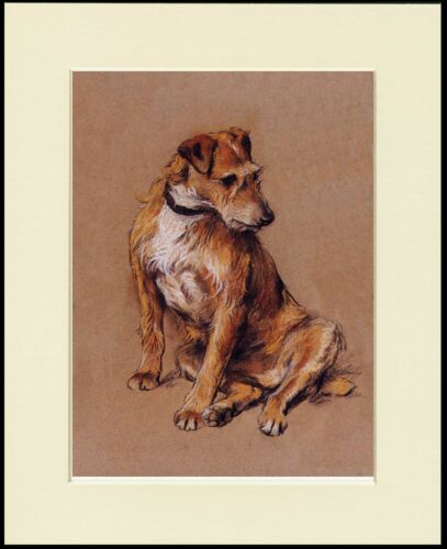 IRISH TERRIER SEATED LOVELY DOG PRINT MOUNTED READY TO FRAME