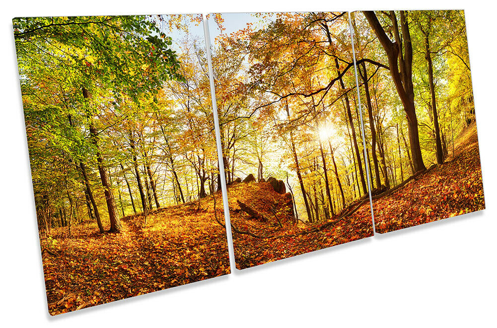 Sunset Autumn Forest Landscape Print CANVAS WALL ART TREBLE Picture braun