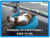 Funny Squirrel Tired Refrigerator / Tool Box Magnet Gift Card Insert