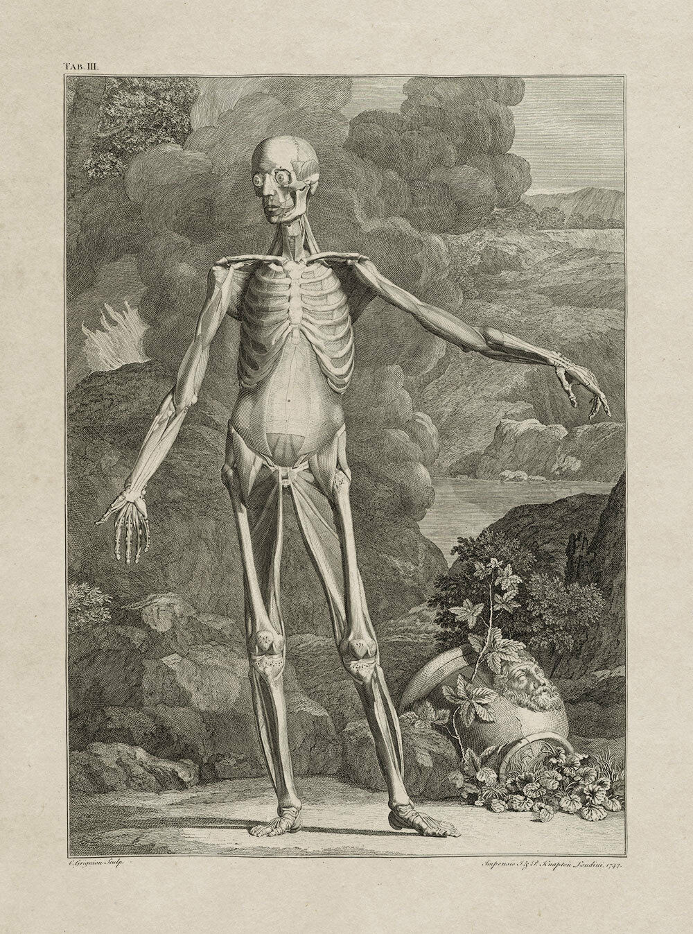 Bernhard Albinus    Table IIIa (Muscle Man)  (1747) — Giclee Fine Art Print