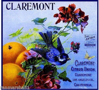 Claremont Citrus Union Blue Bird Orange Citrus Fruit Crate Label Art Print