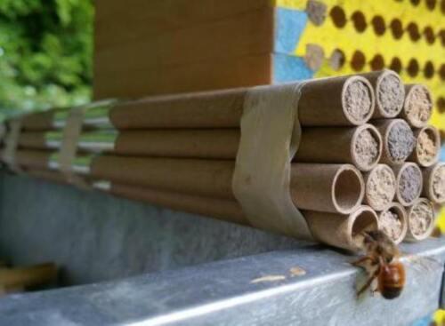 Ø 8 x 90mm lang,Insektenhotel,Niströhren,Papphülsen 100 Bruthülsen,Mauerbienen