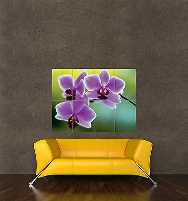 POSTER PRINT PHOTO NATURE PLANT FLOWER ORCHID PINK PRETTY PETALS COOL SEB755