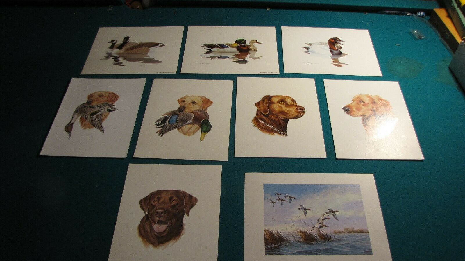 "Lot of 9 Dog & Duck prints waterfowl retrievers canvasbacks Canada geese 10x12""  on eBay thumbnail"