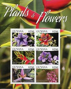 Guyana-2015-neuf-sans-charniere-plantes-amp-fleurs-6v-m-s-i-bravo-bleu-veine-cannonball-tree-stamps