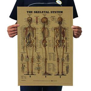 Vintage-The-Human-Skeleton-Photo-Picture-Anatomy-Skeletal-System-Poster-Paper