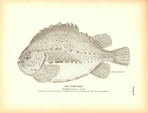 Rare 1884 Antique Fish Print ~ Odd and Freaky set 1 ~ You choose one
