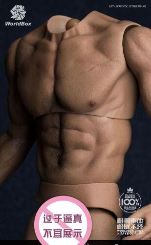 "WorldBox 1//6 Homme Large épaule muscle body 12/"" figure homme fit Long Cou Tête"