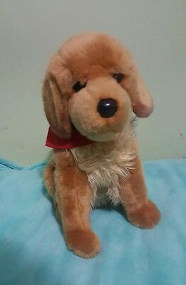 Douglas Golden Retriever 15