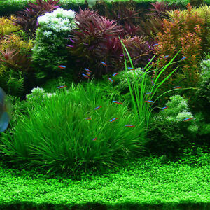 1000-Neu-Mixed-Fisch-Aquarium-Grassamen-Wasser-Wasserpflanze-Samen-Grun-Pf-B0I0