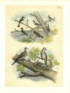 MOURNING-TURTLE-DOVE-FLY-CATCHER-PHOEBE-NUTHATCH-THE-WARBLING-VIREO-WOOD-PEWEE
