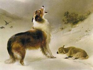 COLLIE-Sheltie-Dog-FOUND-Lamb-SHEPHERD-039-S-CALL-Giclee-Art-Print-LARGE-19-034-x-13-034