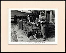 BORDER COLLIE SHEPHERD SHEEPDOG TRIALS WINNER DOG PRINT MOUNTED READY TO FRAME