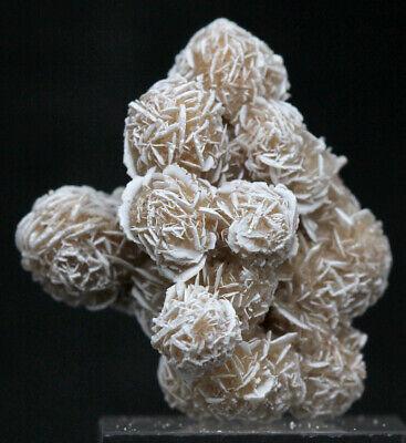 SELENITE GYPSUM Crystal Cluster Mineral Specimen Desert Rose MEXICO  | eBay