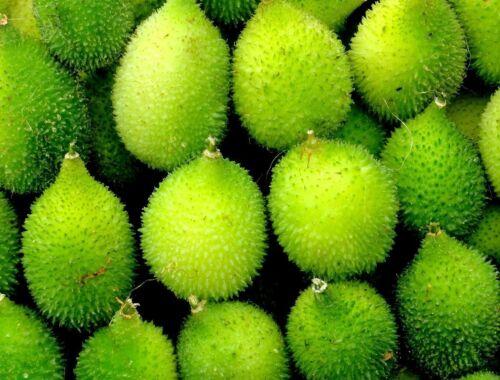 Momordica dioica OR Kantola Seed Spine gourd Seeds kakrol online