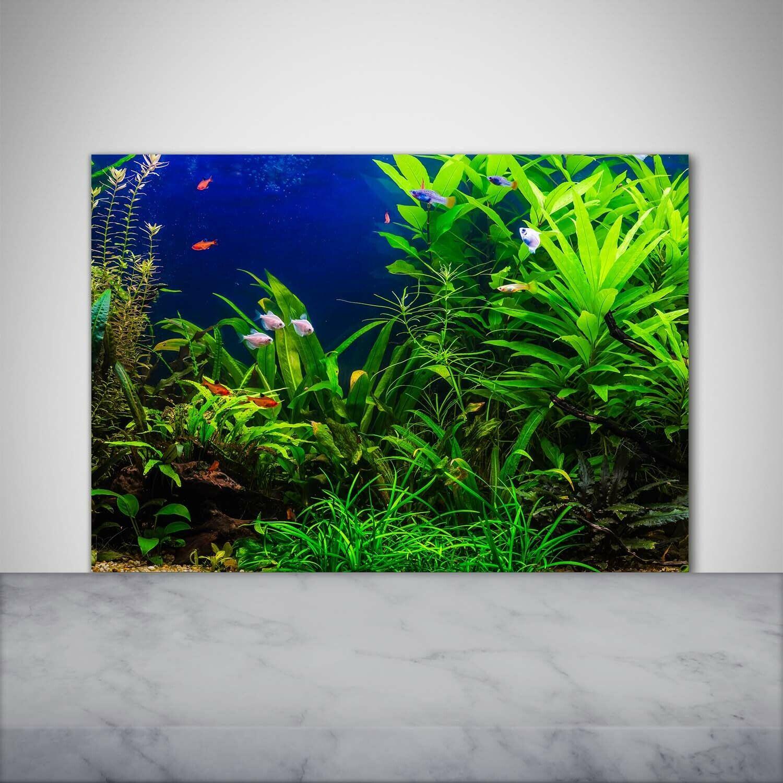 Küchenrückwand Spritzschutz aus Glas 100x70 Deko Landschaften Fische im Aquarium