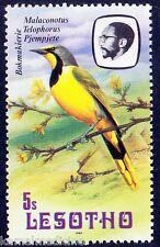 Bokmakierie, Birds, Lesotho MNH -  B1
