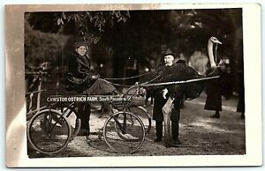 VTG Postcard Real Photo RPPC California CA Cawston Ostrich Farm So Pasadena B1