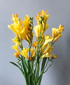 Bunch of artificial yellow freesias realistic faux silk spring image is loading bunch of artificial yellow freesias realistic faux silk mightylinksfo