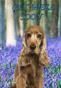 Details About Cocker Spaniel A5 Personalised Greeting Card Get Well Soon Dog Design Pidco1