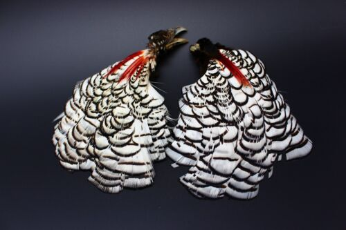 2 pcs Natural Lady Amherst Complete Pheasant Head and Crest Fly Tying Feather