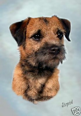 "Blank Card Design No 11 By Starprint Border Terrier Dog A6 4/"" x 6/"""