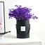 Cajas-de-flores-ramo-de-tipo-de-mano-redonda-Living-jarrones-floristeria-Flor-Planta-Cajas miniatura 6
